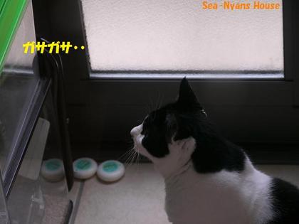 11月14日 朝、ミューちゃん見ています.jpg
