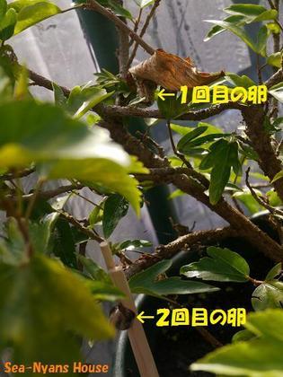 12月29日 位置関係.jpg