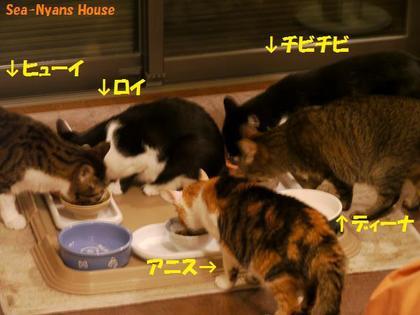 5匹は一緒に食べます.jpg