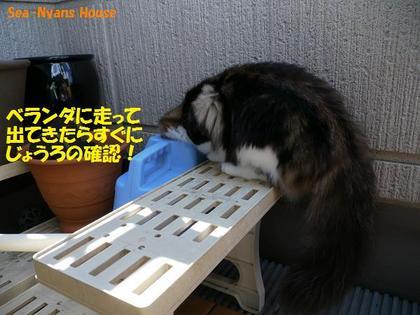 いきなり確認作業.jpg