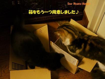 みんな箱が好き.jpg