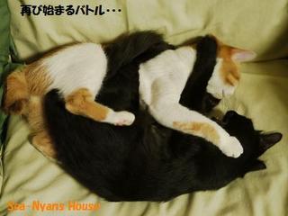 らんらん&シャモン4.jpg