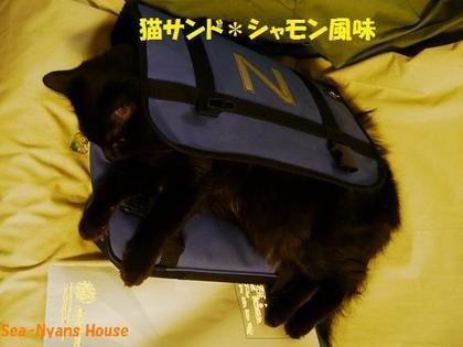 サンド猫2.jpg