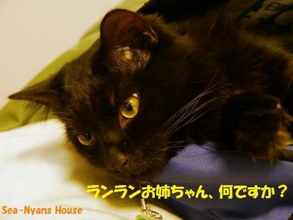 サンド猫3.jpg