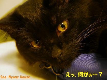 サンド猫4.jpg