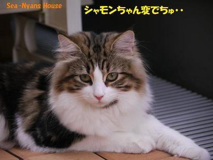 シャモンちゃん、変.jpg