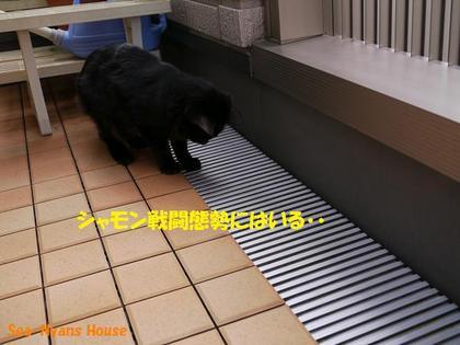シャモン戦闘態勢.jpg