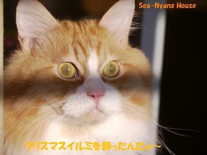 ヒースの目、猫だねぇ〜.jpg