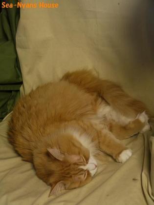 ヒースはソファーにうつりました.JPG