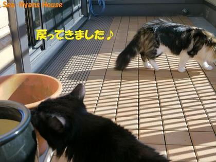 ベランダ遊び23.JPG