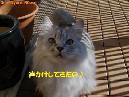 ベランダ遊び25.JPG