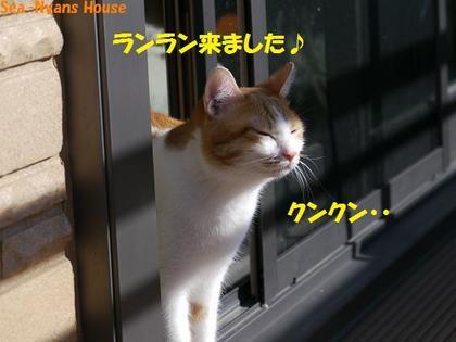 ベランダ遊び26.JPG