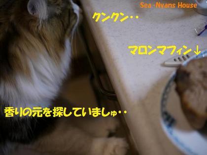 マロンマフィン7.JPG