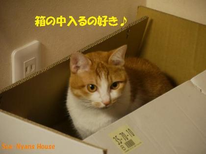 ランランも箱は好き.jpg