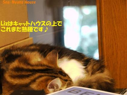 リズちゃんも熟睡.jpg