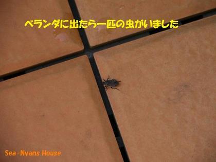 何虫?.jpg