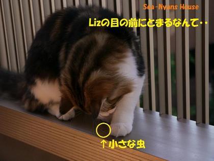 間抜けな虫ちゃん.jpg