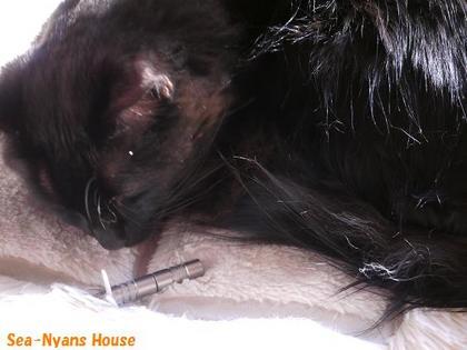 黒猫と鼻毛カッター1.JPG
