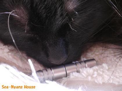 黒猫と鼻毛カッター4.JPG