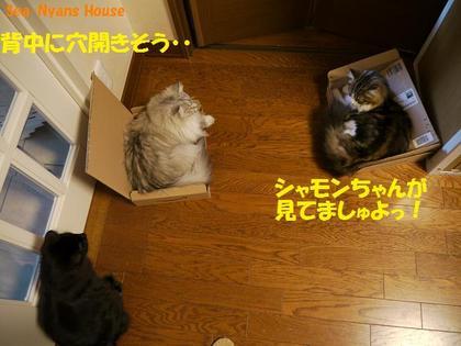 三角関係.jpg