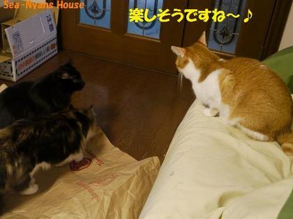 仔ニャンズ6.JPG