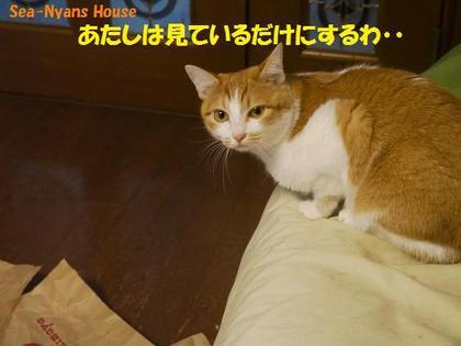 仔ニャンズ7.JPG