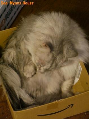 箱の中で毛づくろい.jpg