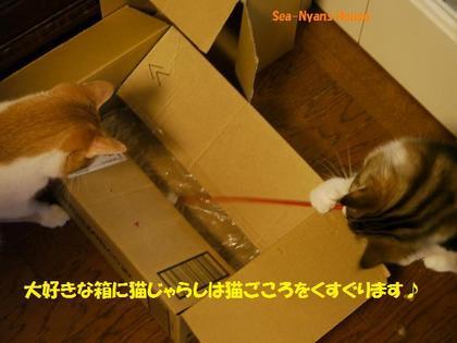 箱の中に入りたいよね.jpg
