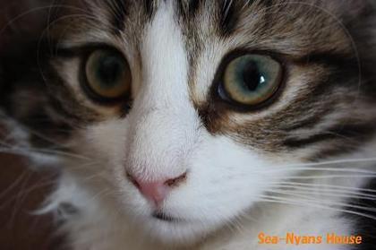 美猫Liz.JPG