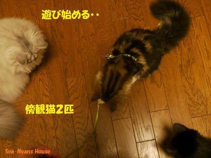 傍観猫が2匹になった.jpg