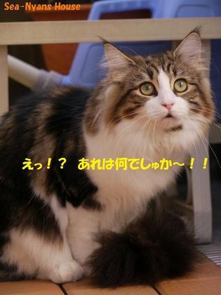 Lizちゃんビックリ.jpg