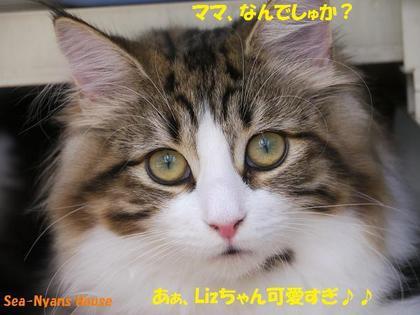 Lizちゃん可愛い.jpg