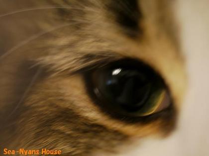 Lizの目.jpg