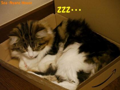 Lizは箱に落ち着く.jpg