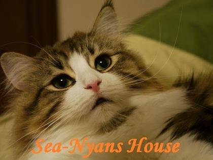 Sea-Nyans House.JPG
