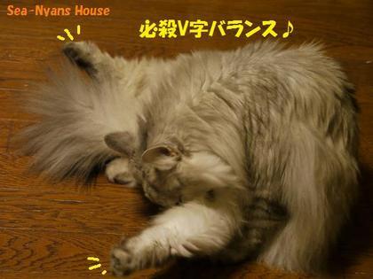 V字バランス.JPG